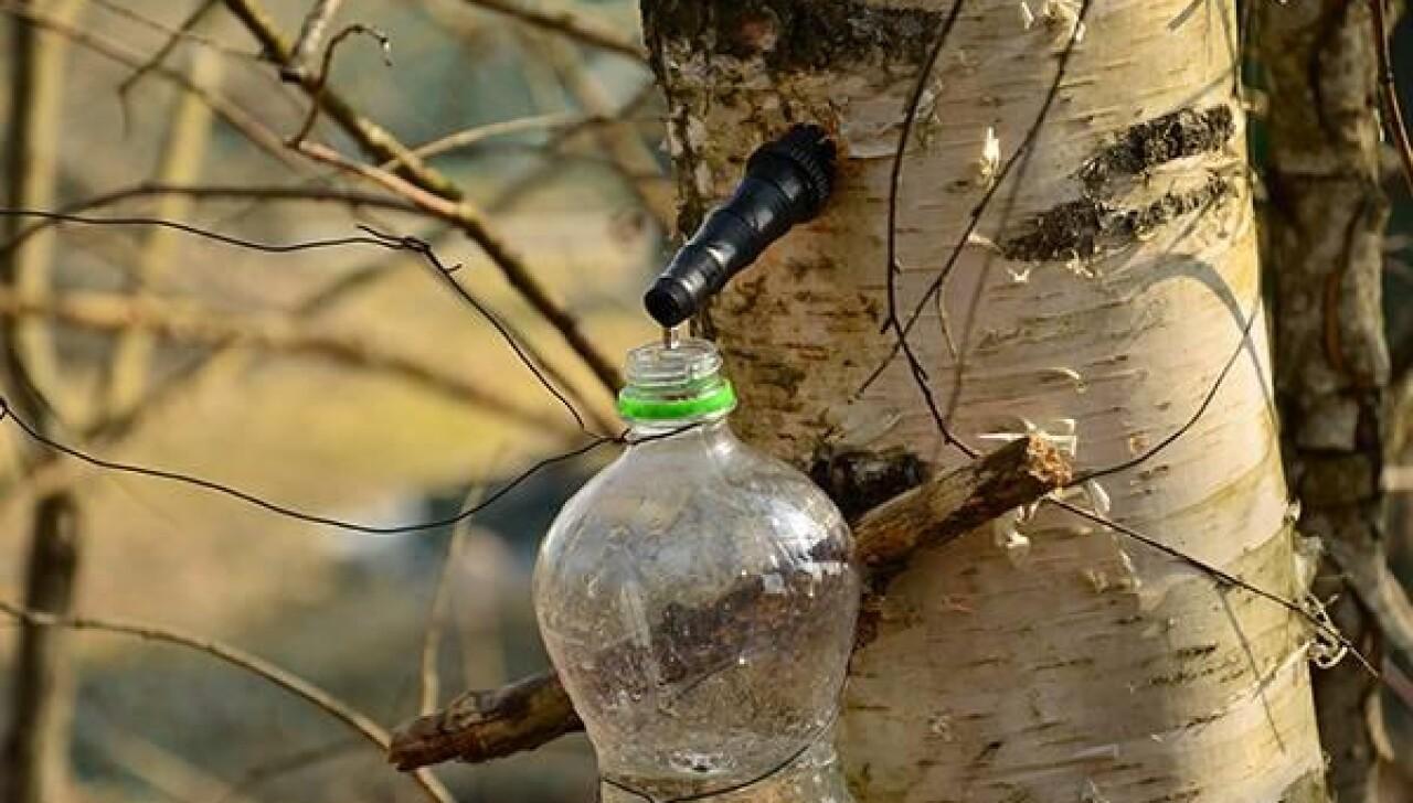 CoolWNS · Березовый сок повышает иммунитет