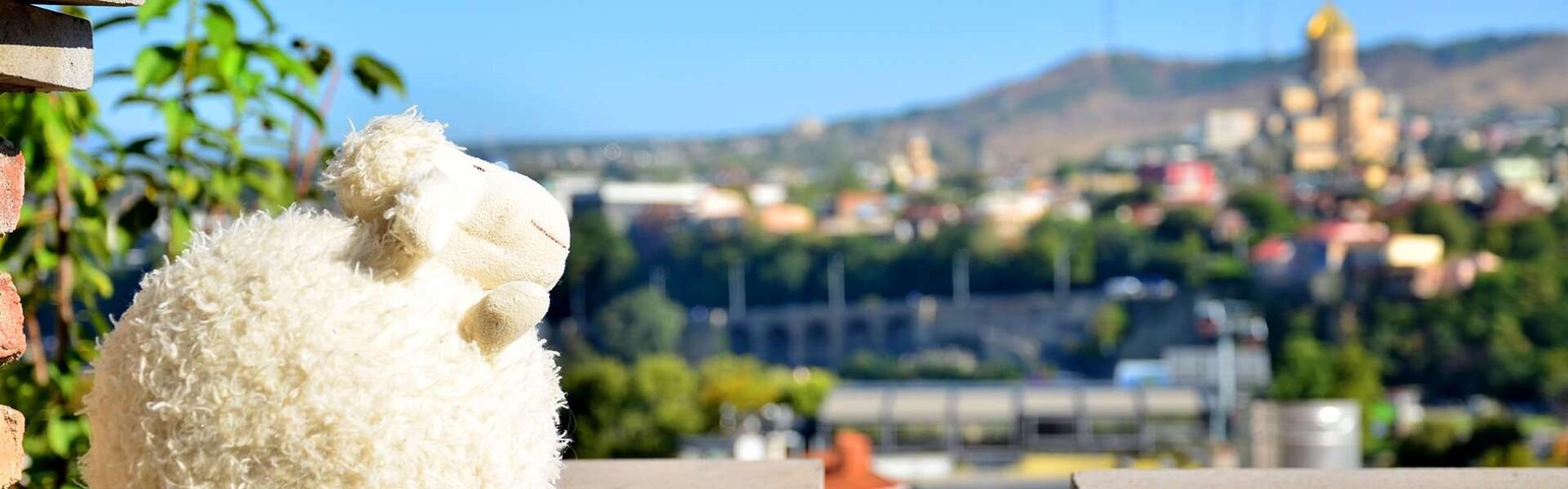 овечка в тбилиси